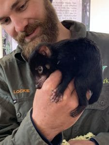 Brain Industries is sponsoring Neville the Tasmanian Devil to support the work of Aussie Ar
