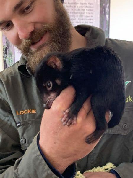 Brain Industries is sponsoring Neville the Tasmanian Devil to support the work of Aussie Ar